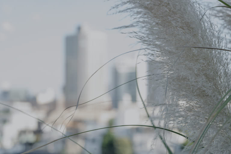 季節の風を愉しむ01