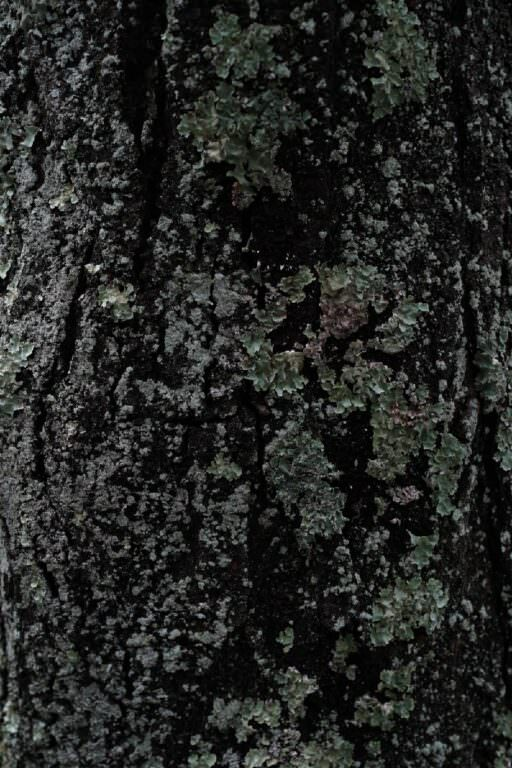 サンカルパ瞑想01