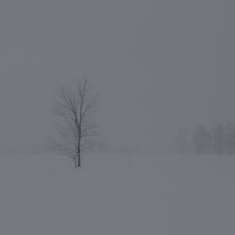雪下の蕗 <大寒 - daikan ->