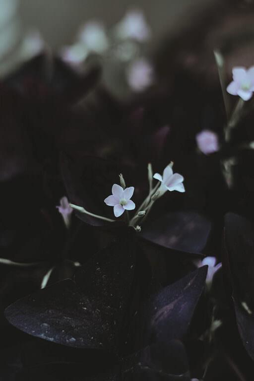 ほころぶ蕾 <春分 -shunbun- >01