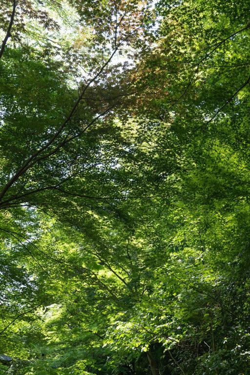 緑の風< 立夏 -rikka- >01