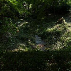 緑の風< 立夏 -rikka- >