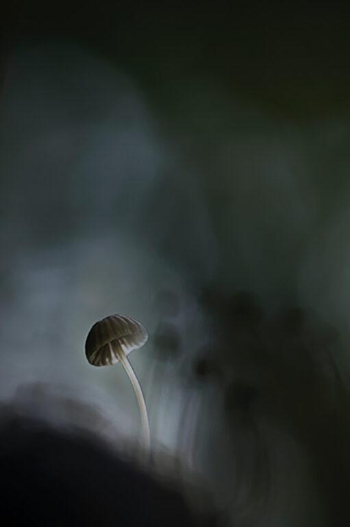雨に流す。01