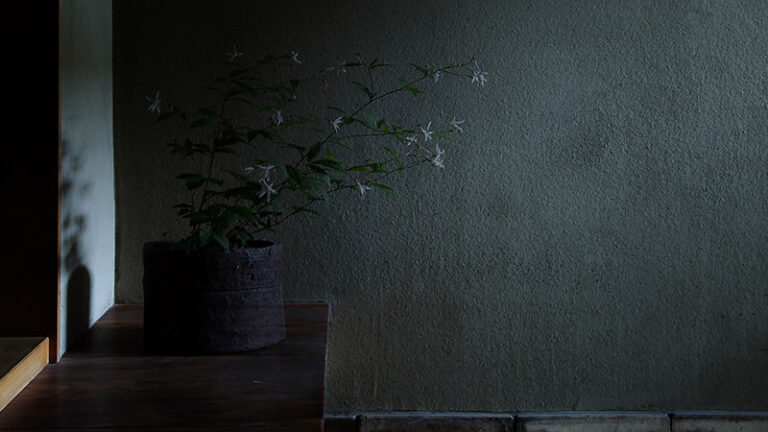 八木夕菜 SENN-03 Black