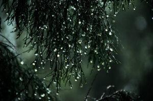 雨に流す。